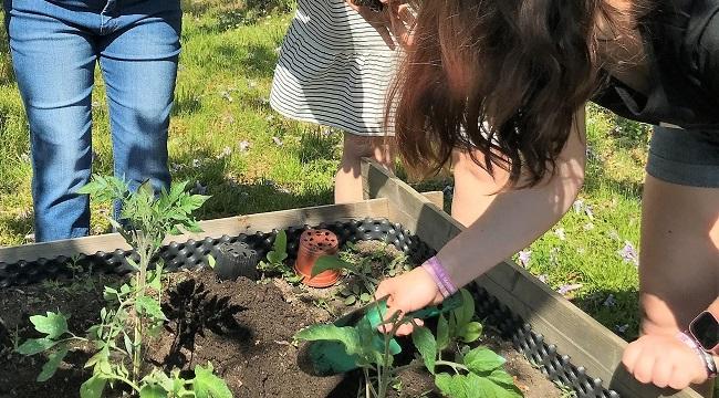 Pracovní výchova, pěstitelské práce – červen 2021